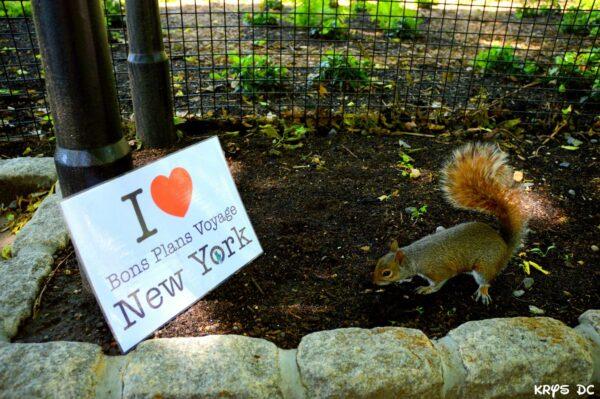 Dédicace de Christophe avec un petit écureuil de Central Park - Juin 2015