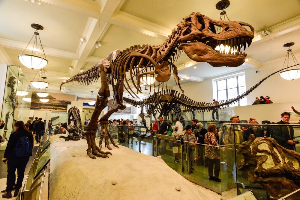 American Natural Museum New York