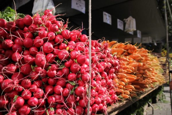 union Square Greenmarket (2)