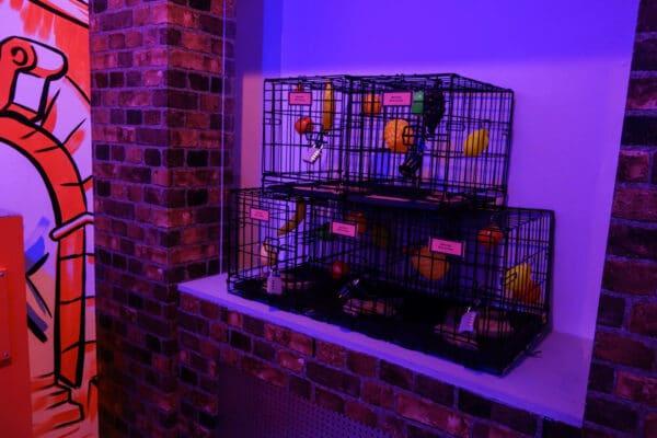 escape-entertainment-nyc-17