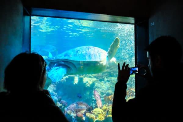 tortue Boston aquarium New England