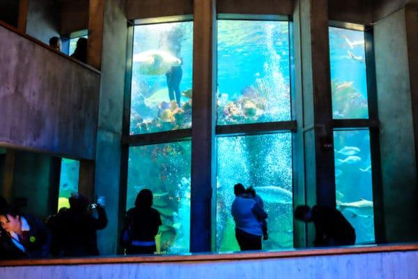tortue  aquarium New England